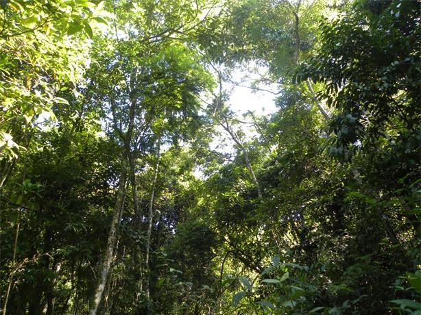 codigo_florestal