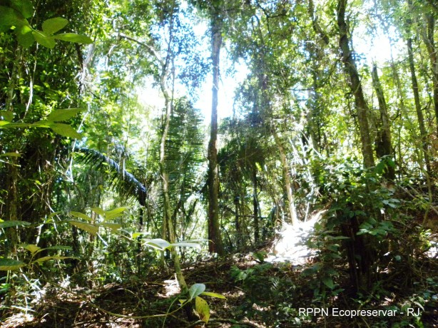 RPPN Ecopreservar - RJ