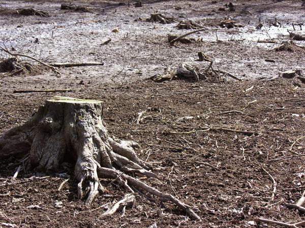 As árvores depois do Novo Código Florestal