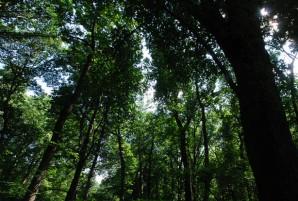 floresta_01
