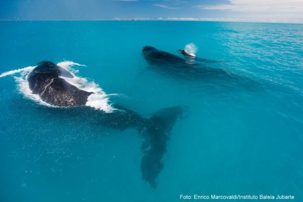 Comunidades pesqueiras e mamíferos como as baleias são os beneficiados do projeto do IBJ apoiado pela Fundação