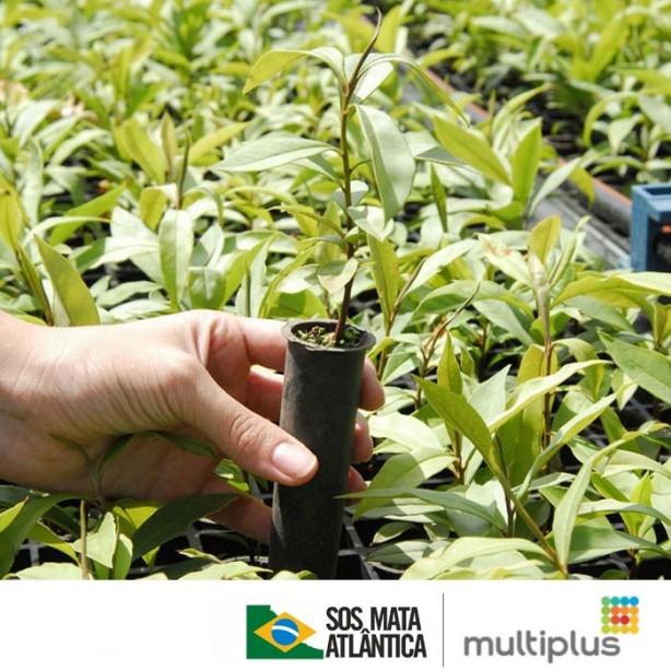 Imagem: Divulgação Multiplus