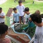 Maquete do projeto itinerante de educação ambiental da Fundação SOS Mata Atlântica