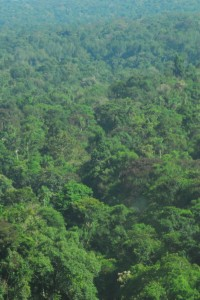 Área que um dia foi estrada voltou a ter floresta dentro do Parque Nacional do Iguaçu