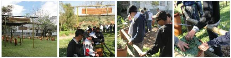 plantas jardim sensorial : plantas jardim sensorial:jardim sensorial faixa