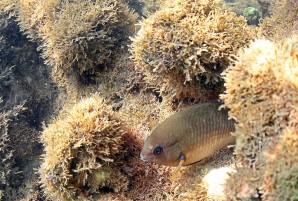 Área de Proteção Ambiental Costa dos Corais