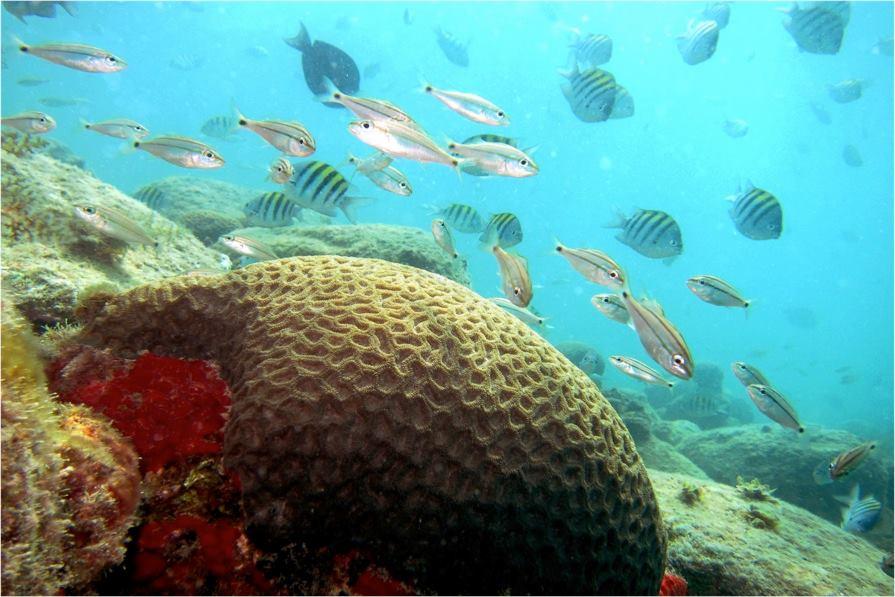 Foto Abrolhos 1