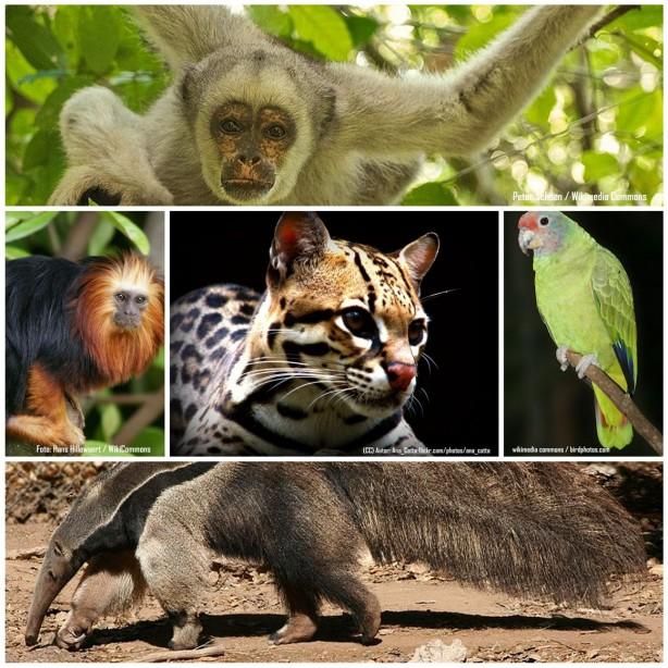 animais brasileiros em risco de extinção
