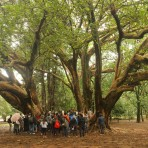 Passeio sobre árvores do Ibirapuera
