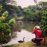 Observação no lago do Ibirapuera