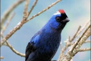 guia de aves pdf gratis