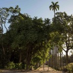 Jardim Botânico.  Foto: Capim Filmes / SOS Mata Atlântica