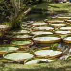 Trilha Jardim Botânico -  Foto: Capim Filmes/SOS Mata Atlântica