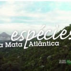 2015 - Campanha Espécies da Mata Atlântica - Parque Nacional da Tijuca. Narração de Regina Casé.