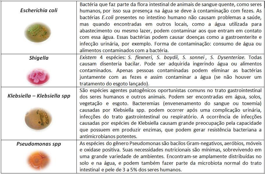 bacterias tabela rio doce