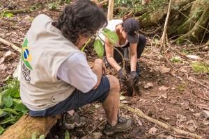 plantio de mudas parque da tijuca viva a mata 2015