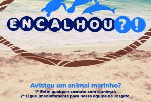 biota-mar-campanha-encalhou
