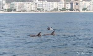Golfinhos-de-dentes-rugosos. Foto: Liliane Lodi