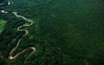 Planície da Lagoa do Parado - mata atlantica, litoral do Paraná - Guaratuba