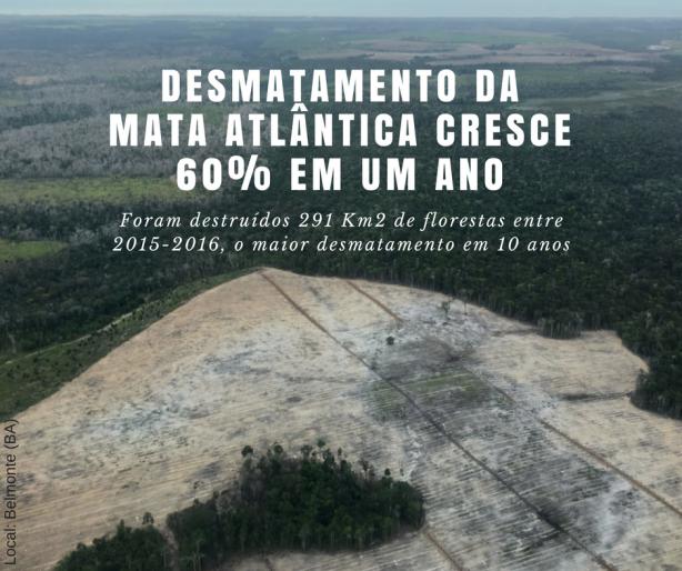Desmatamento cresce na Mata Atlântica