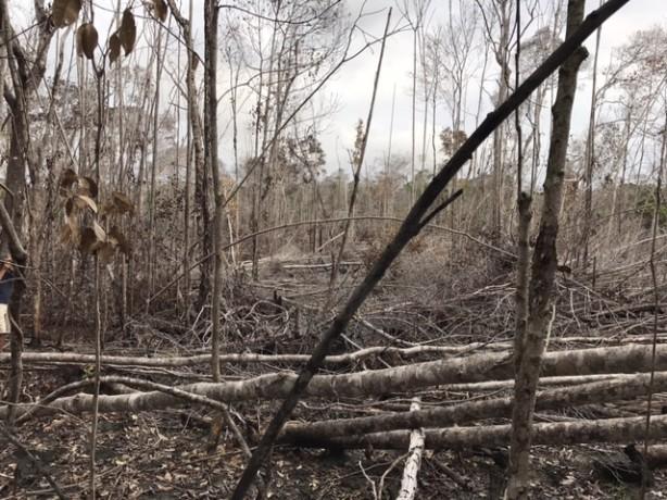 mata atlantica desmatamento