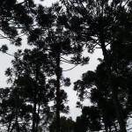 Expedicao-Iguacu6