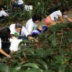 Seja voluntário no mês da Mata Atlântica - Parque Trianon