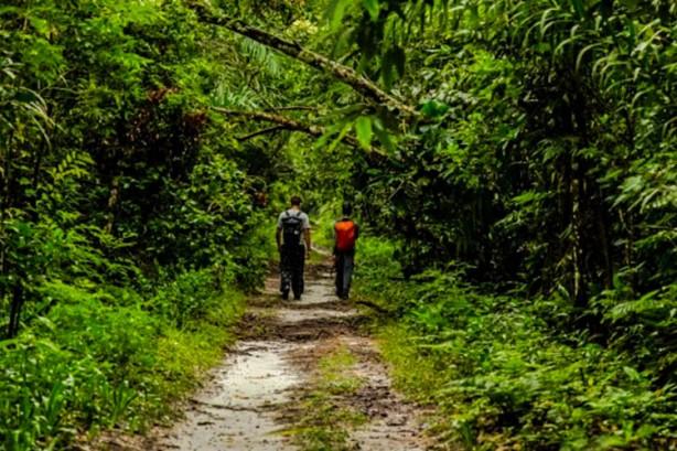 Foto: ABECO. Trilha de Guaratuba, no Parque Estadual Restinga de Bertioga.